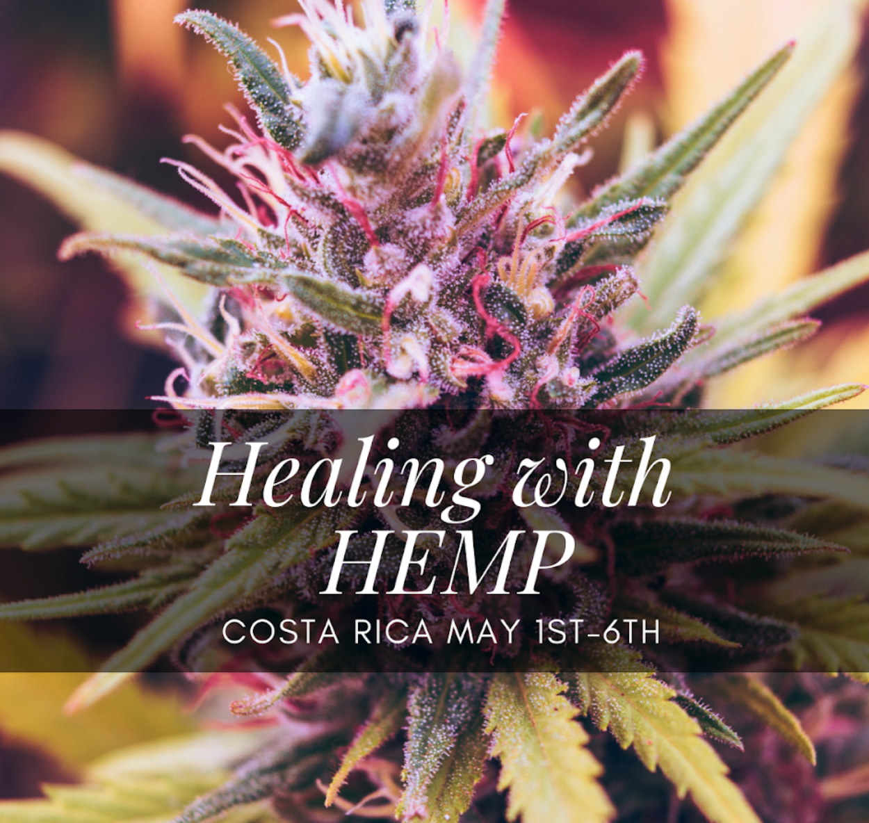 Are you feeling anxious, depressed, and stressed? - Suffer from long-term physical pain?Had a bad experience with Cannabis and still hold the echos?Want to learn more about the healing properties of this plant?Want to experience different cannabis products in a safe and secure space?