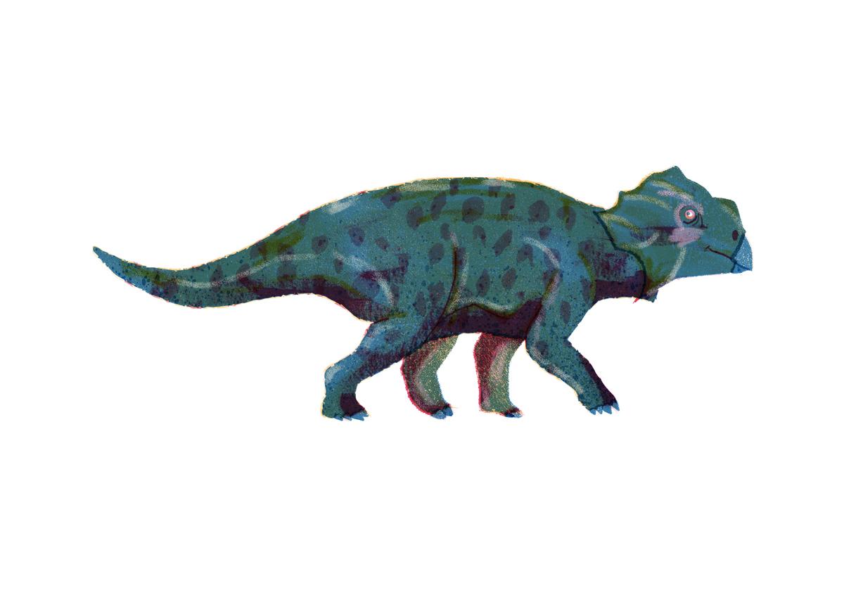 Bagaceratops.jpg
