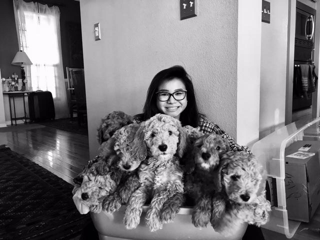 pups in basket.jpg