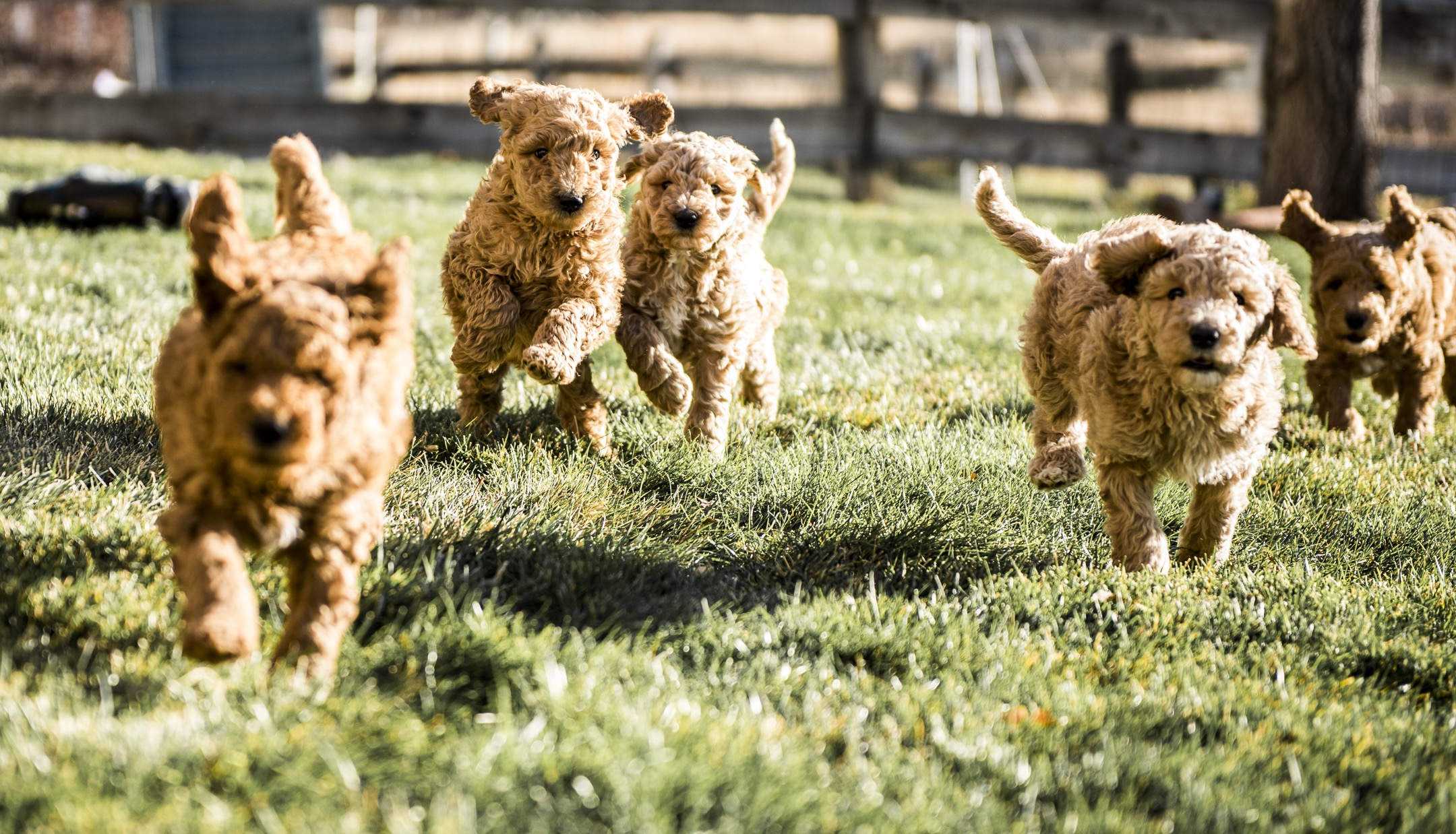 Puppies Run.jpg