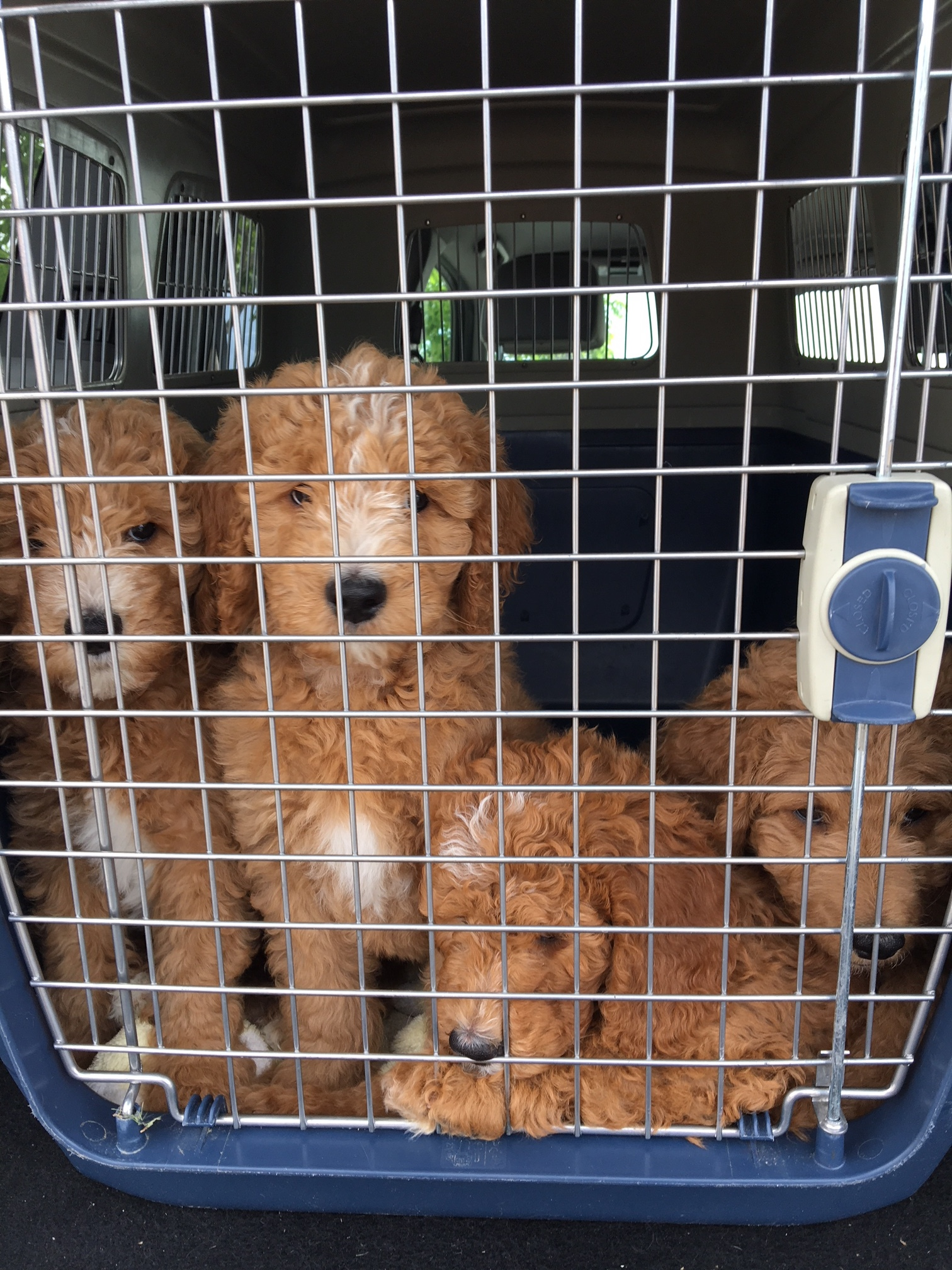 Car rides and field trips 2-3 times a week. Field trips are essential after pups go to their forever home!