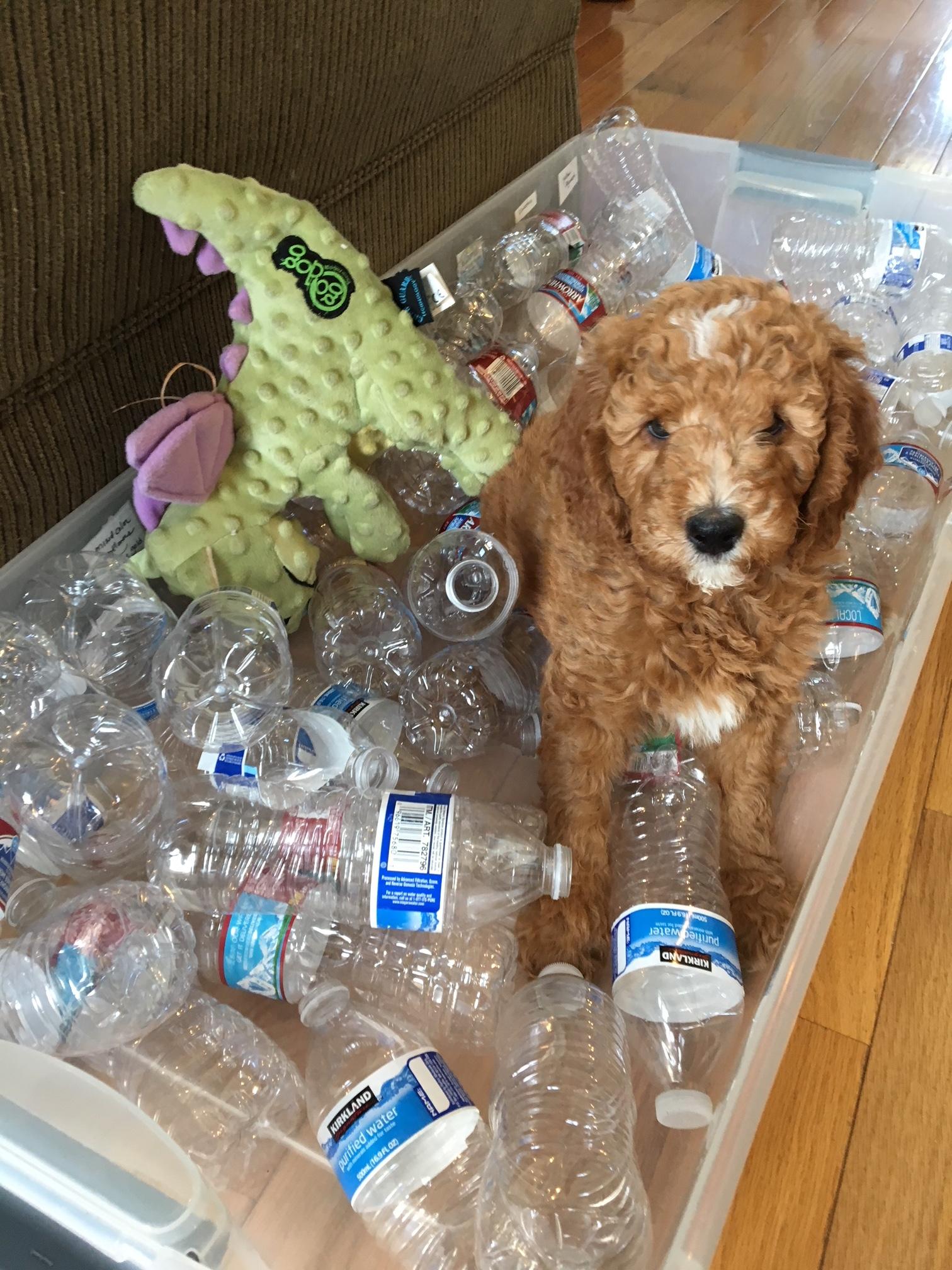 puppy bottles.JPG.jpg