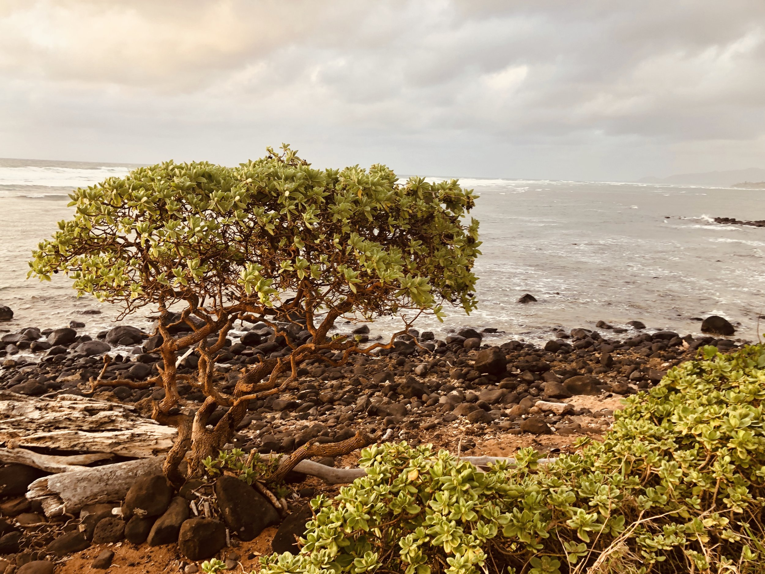 Aloha Serendipity