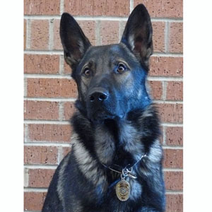 K9 Chase, Fitchburg PD