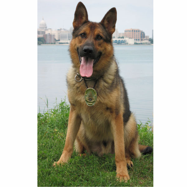 K9 Gildon, Madison PD