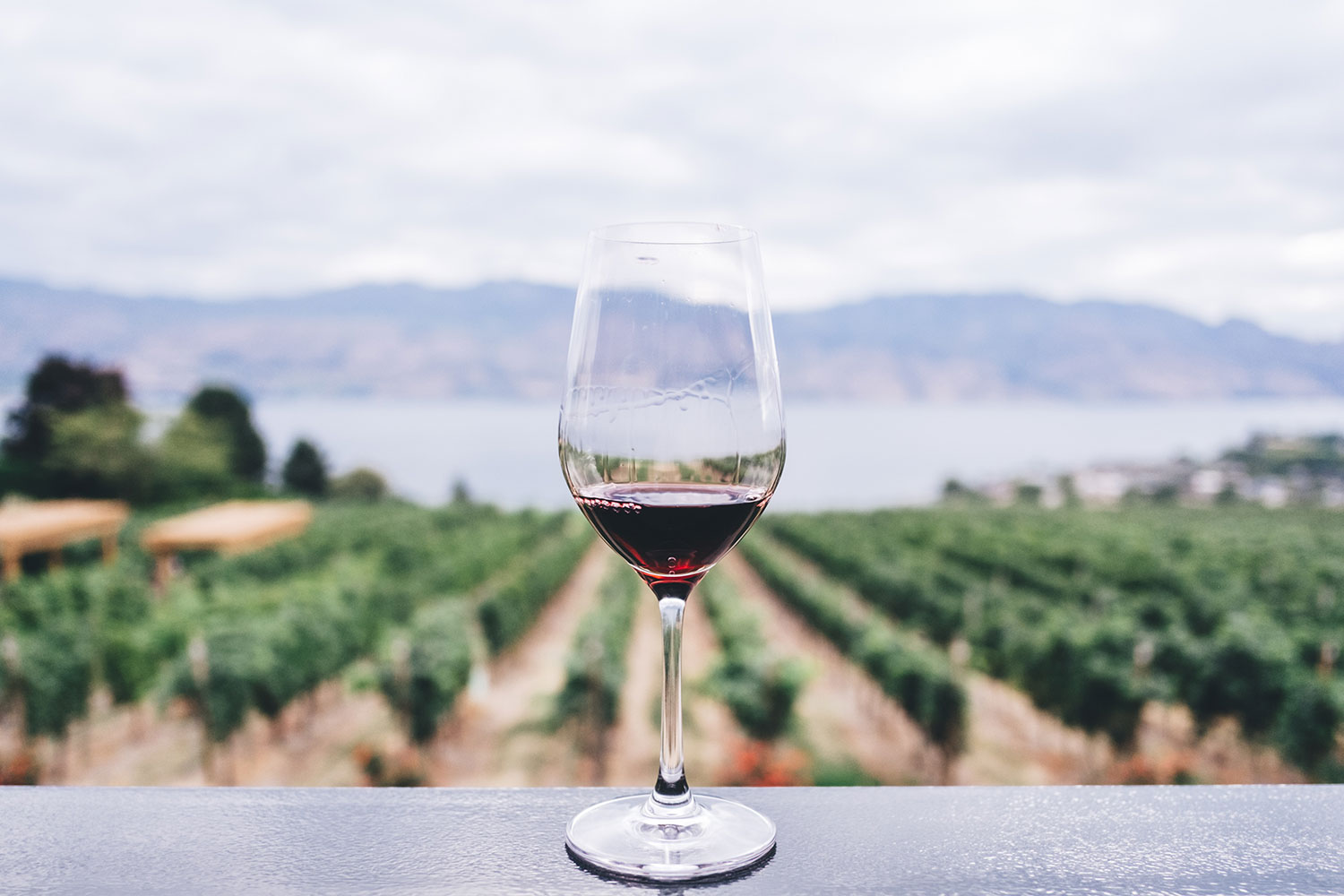 wine-glass-in-vineyard2.jpg