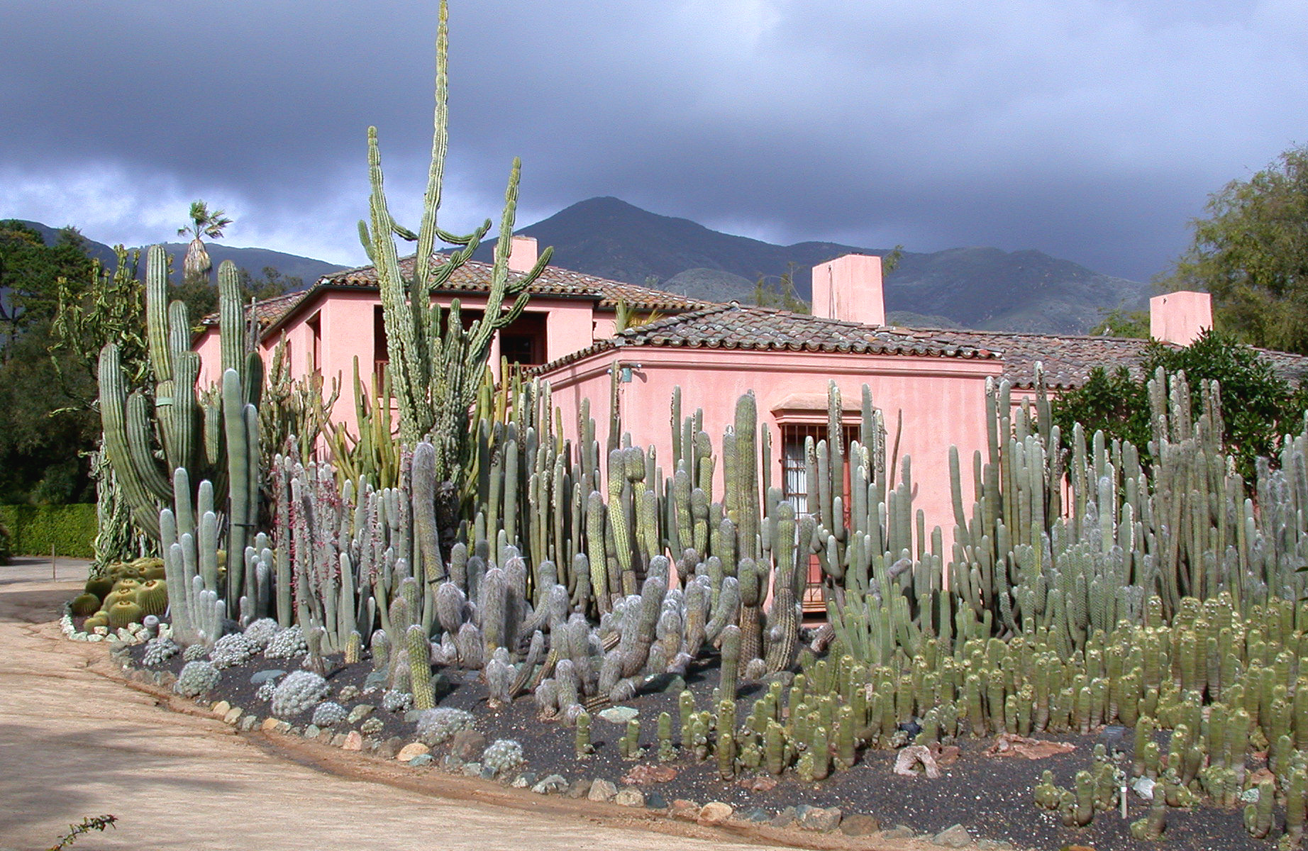 main house with cactus.jpg