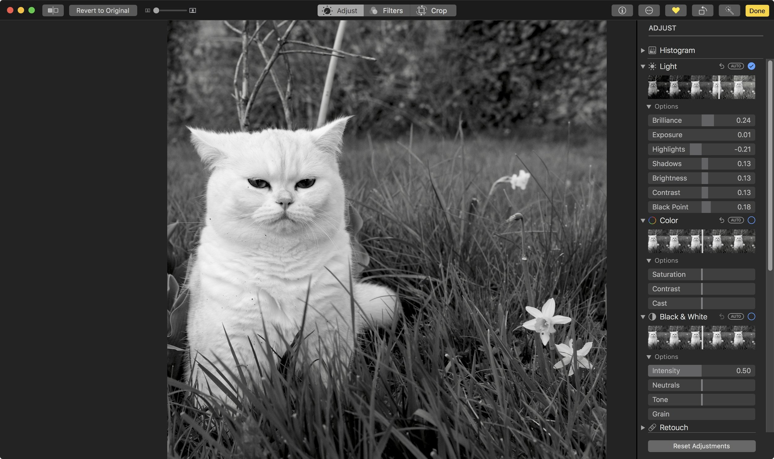 This photo was shot in black and white, using Fujifilm's Acros film simulation.