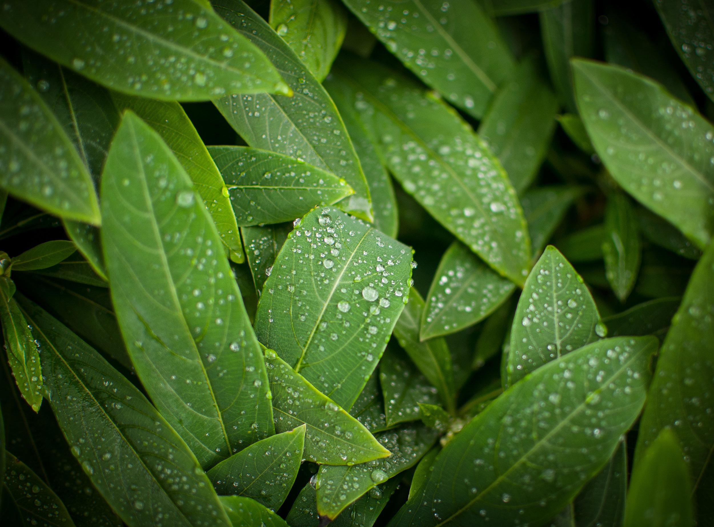 Water Droplets  Camera: Nikon D90 Shutter speed: 1/160 sec Aperture: f/1.8 ISO: 200 Photo: Jeff Carlson