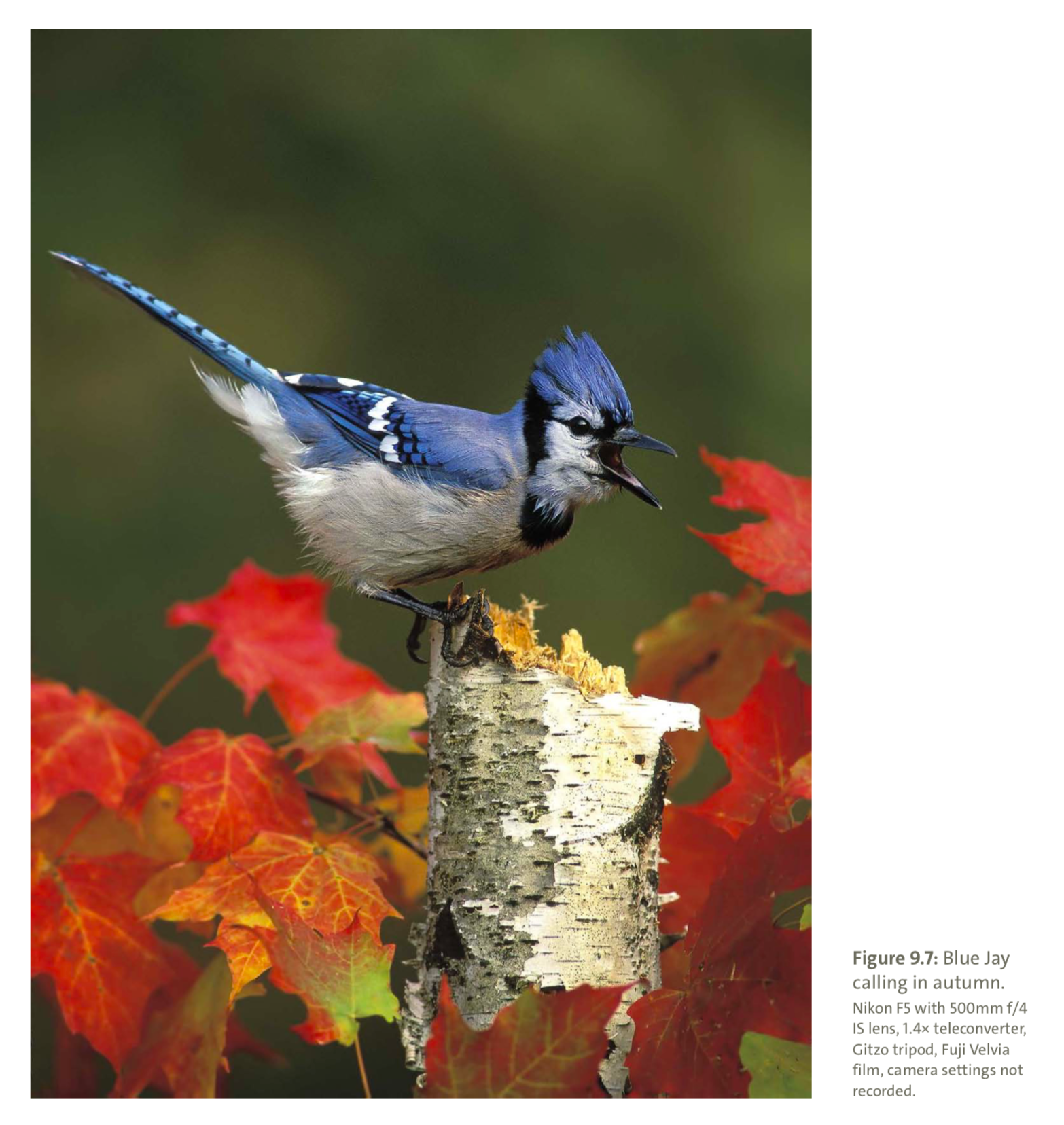 Figure 9.7 from Mastering Bird Photography  Photo: Marie Read