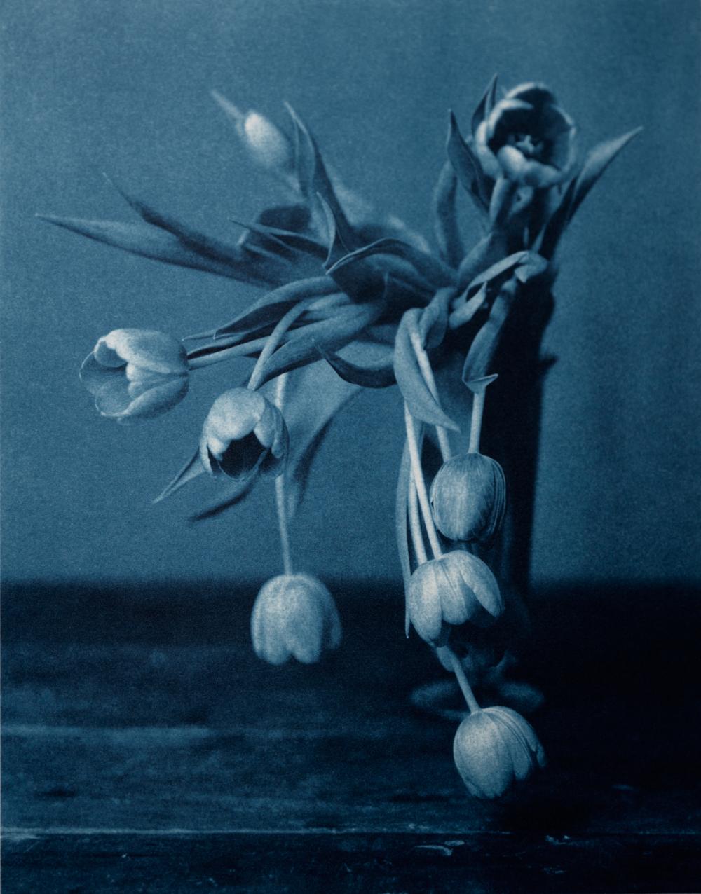 John Dugdale // Mourning Tulips // Morton Street, N.Y.C. // 1999 // Cyanotype Print
