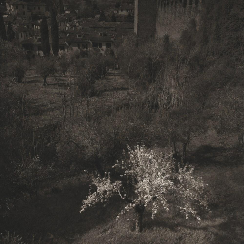 Cherry-Tree-Italy-Platinum-Palladium.jpg