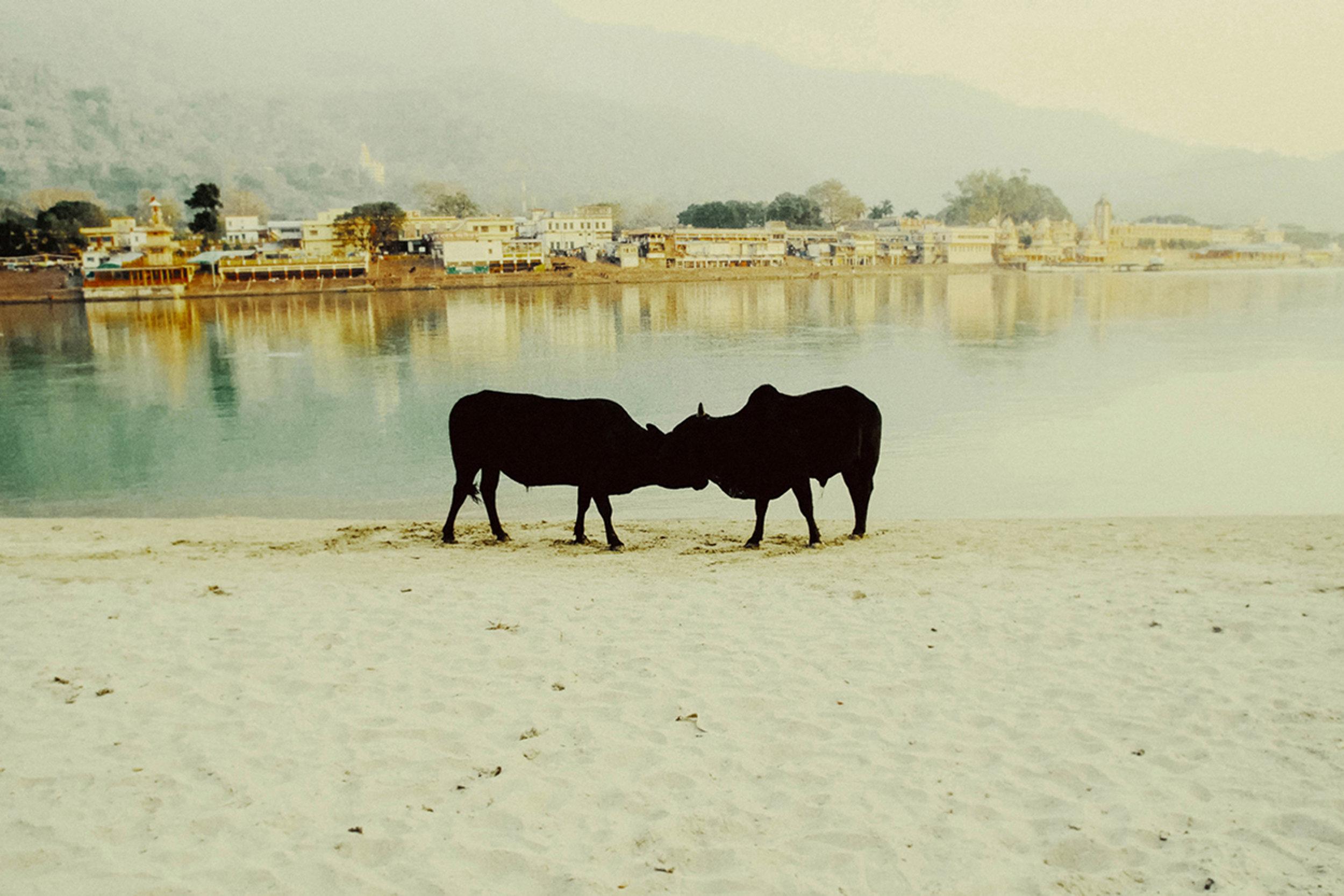 ©Debmalya Choudhuri