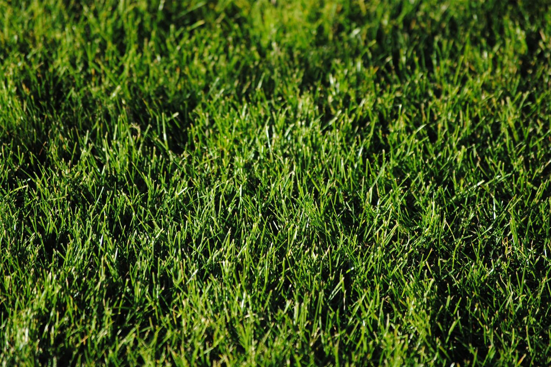 lawn_care.jpg