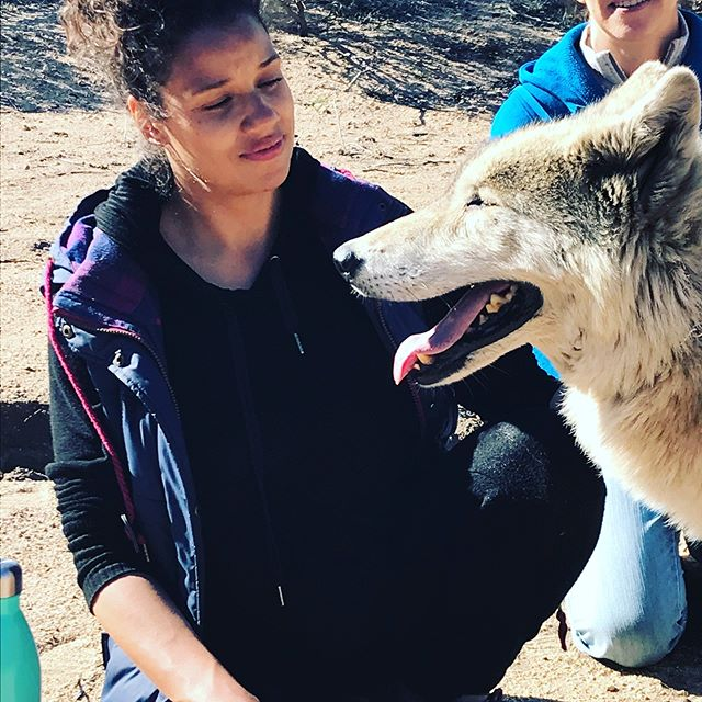 I had the most inspiring time at the women and wolves retreat at @wolfconnection . We can learn so much off these incredible animals. They are independent thinkers but still realize the importance of the pack! I think as humans we should strive to be the same. Let's be fearless and determined in our personal journeys but never forget everyone needs a tribe! I also love how the Alfa female is at the top of the pack!!! See females make great leader ⚡️🐺⚡️ . . . #warriorwomen #womansupportingwomen #iamshe #wolfconnection #agirlcalledshe #femaleempowerment #womenandwolves