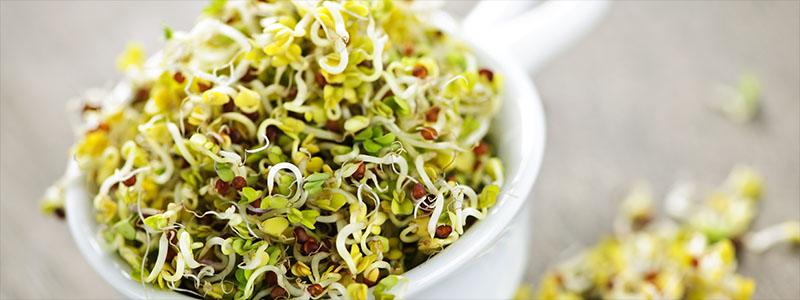 alfalfa sprouts.jpg