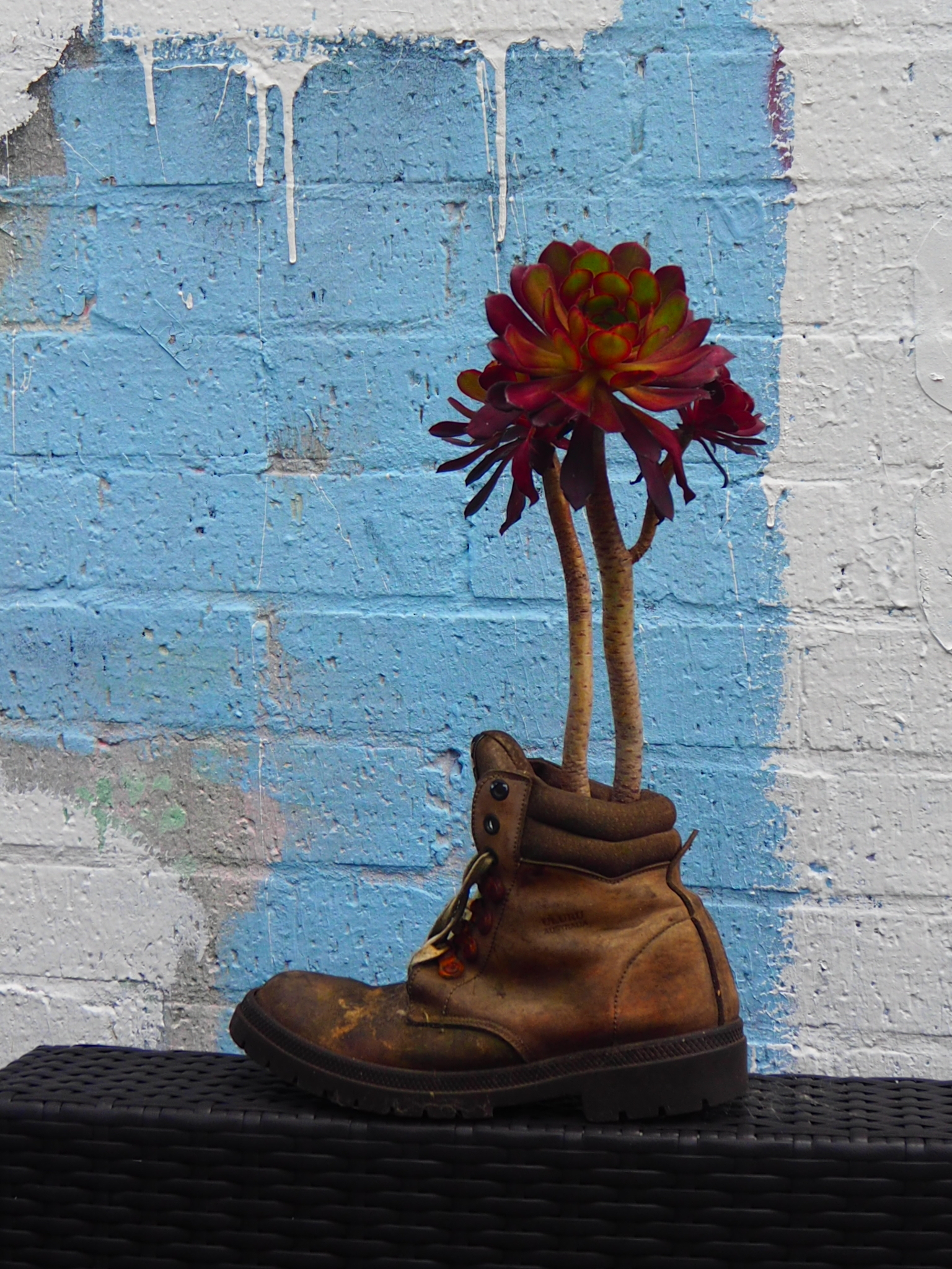 Re-boot your garden - Do you get that feeling of sadness when throwing out old things, and think... it's not quite dead yet... it could have another life as something...