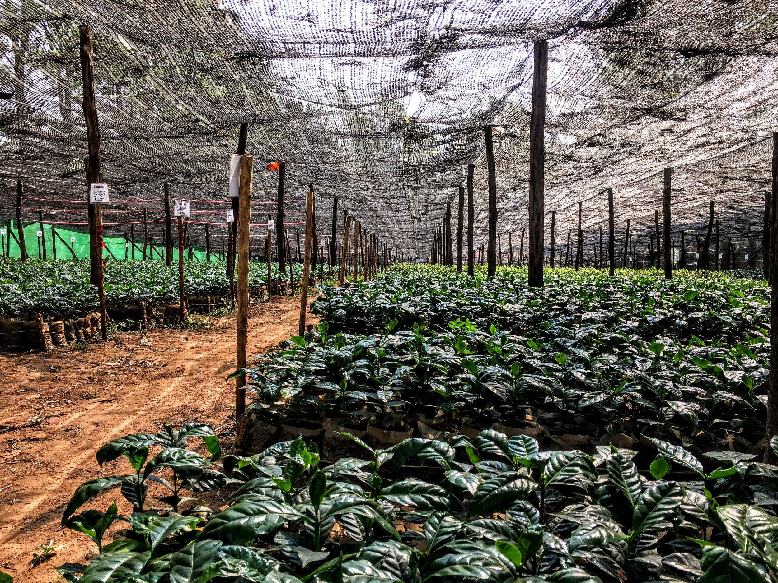 Myanmar nursery.JPG