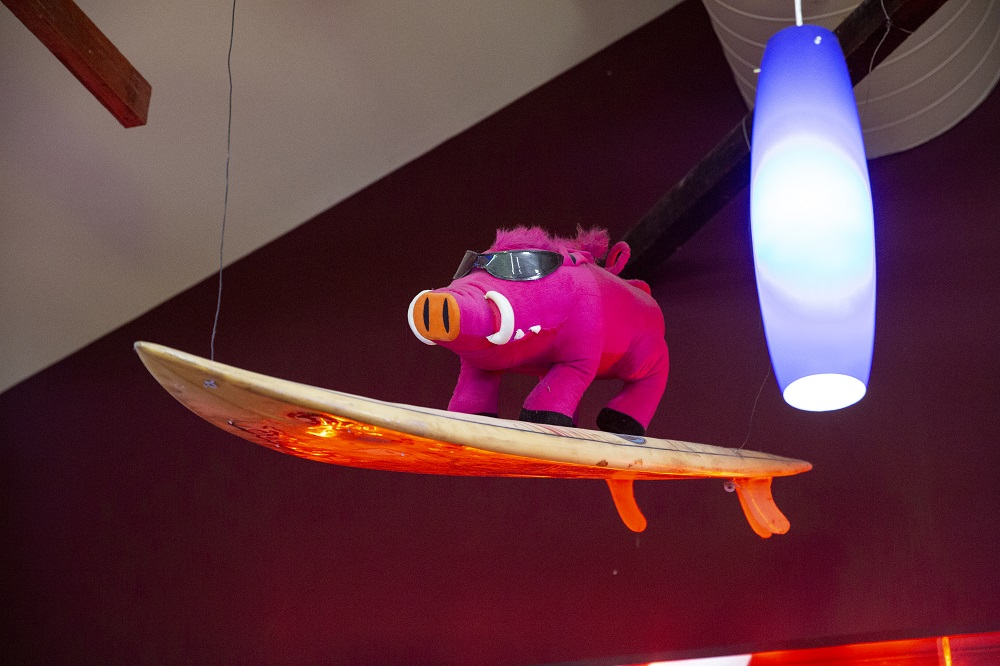 The Lunch Rush is over, Hoggie is off for a surf -0A5A9538to cut out.jpg