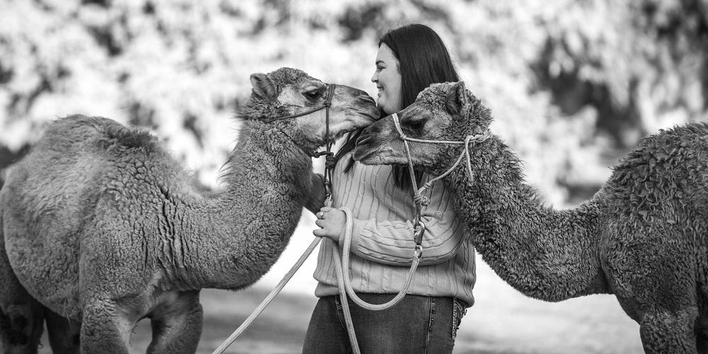 camels.jpeg