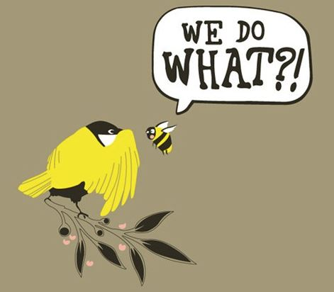 birds bees.JPG