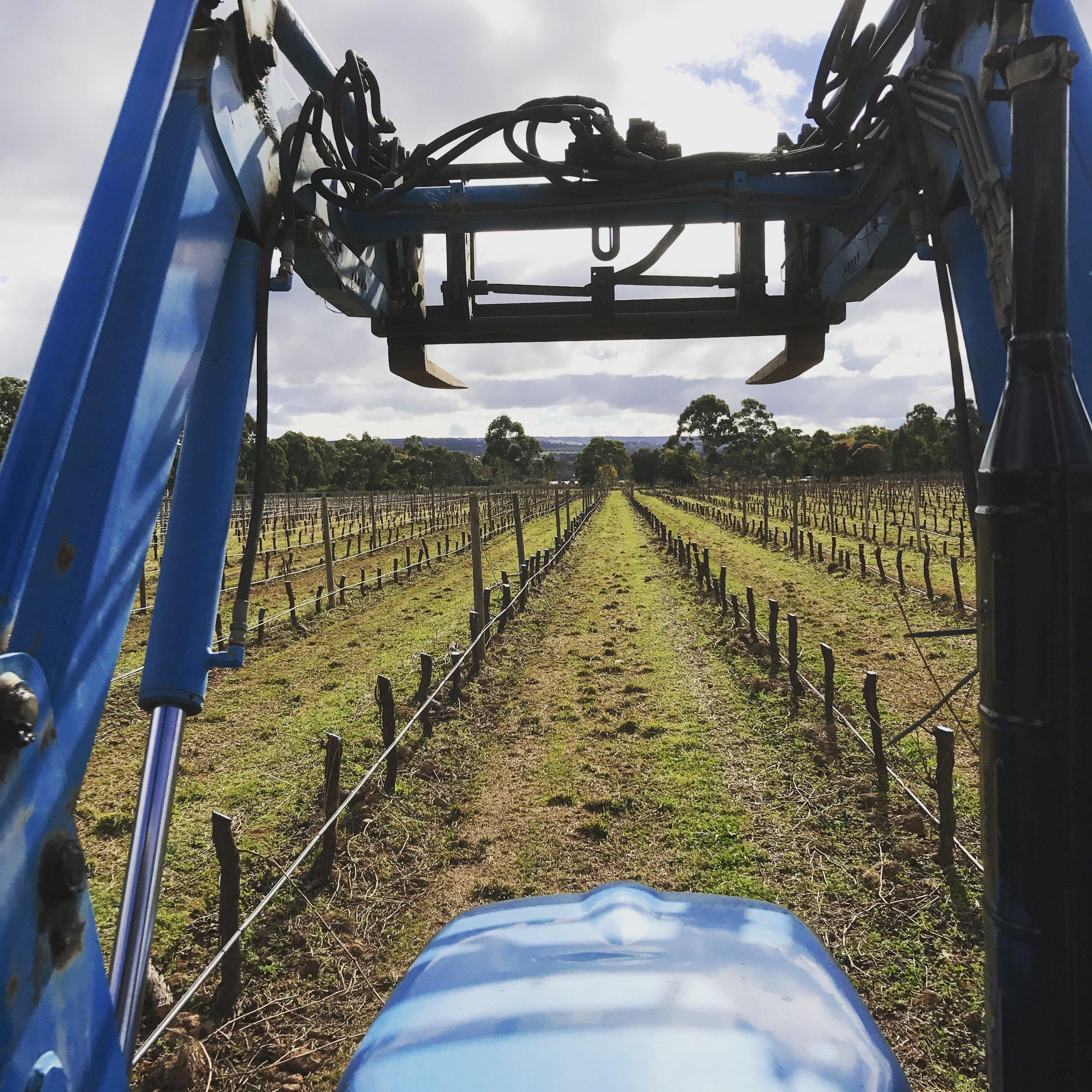 Vineyard Re-Development