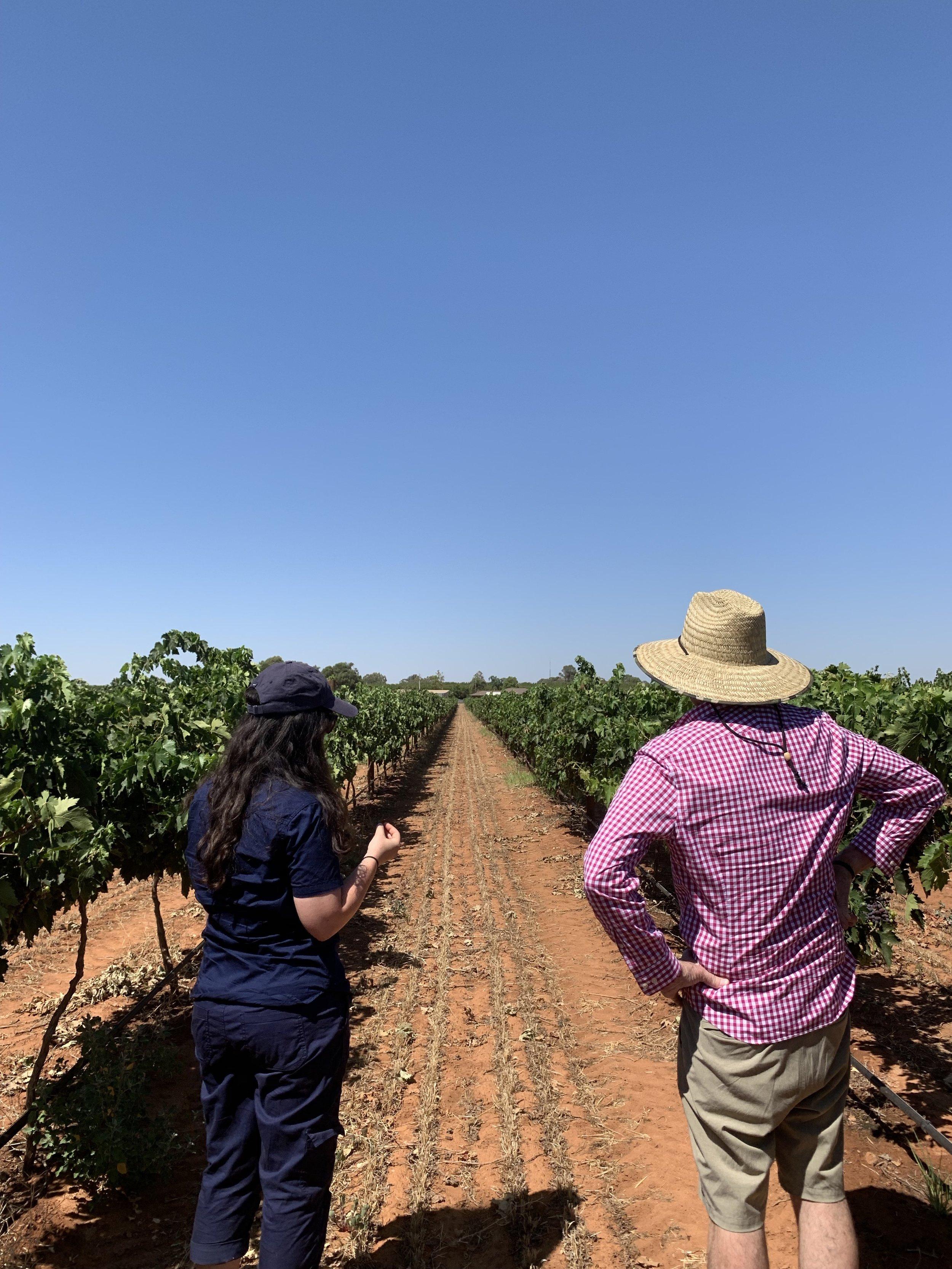 2019 Nero D'Avola vineyard checks with Kev