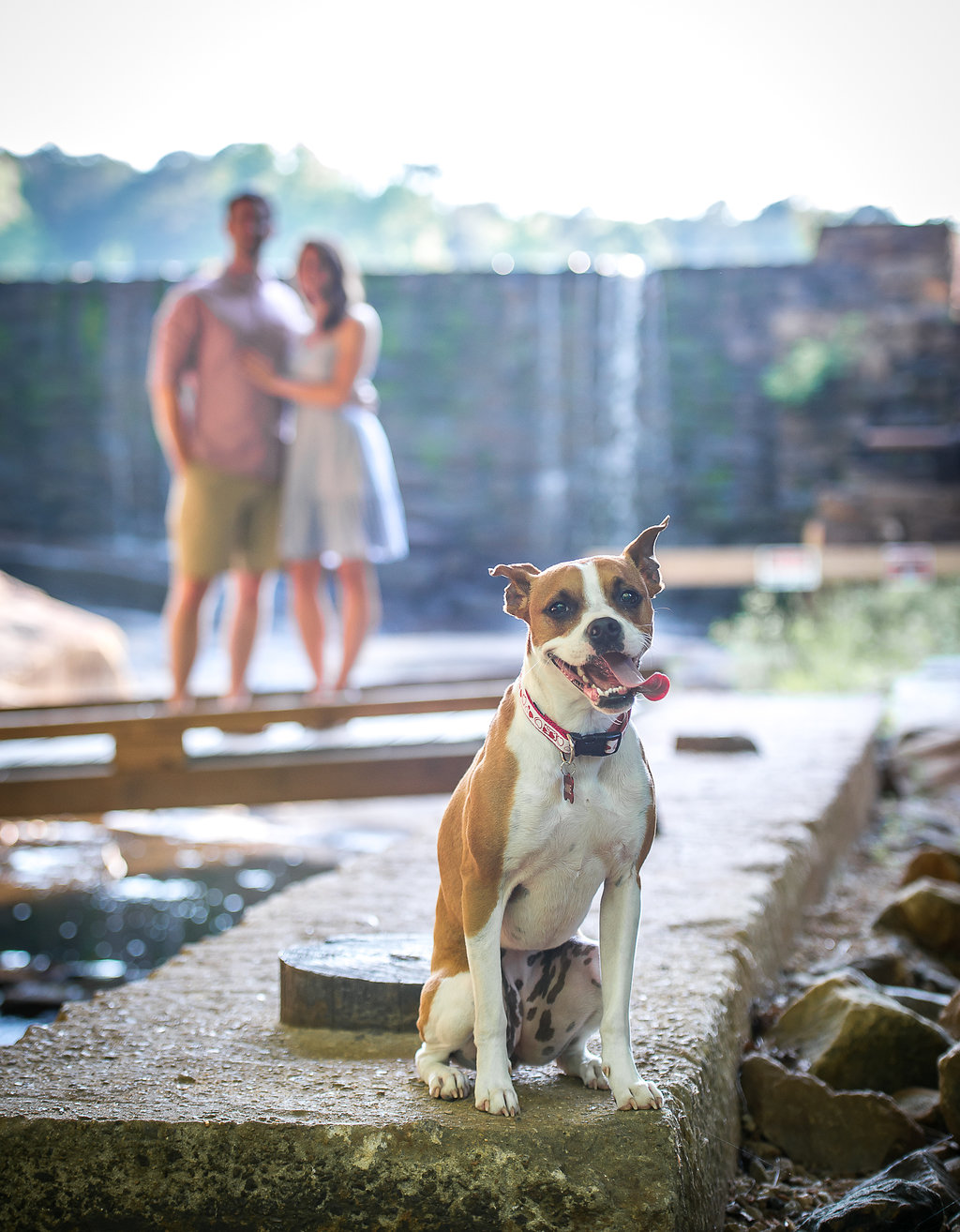 Dog Engagement Photos Raleigh NC.jpg