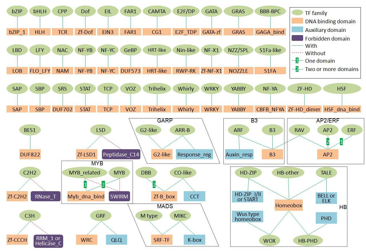 Plant transcription factors . Image: http://planttfdb.cbi.pku.edu.cn (above)  Plant transformation vector . Image: Bernardo Pollak (right)