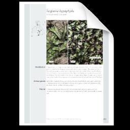 Targionia hypophylla.png
