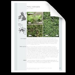 Pellia endiviifolia.png