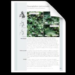Conocephalum conicum-salebrosum.png