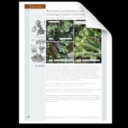 Marchantia polymorpha.png