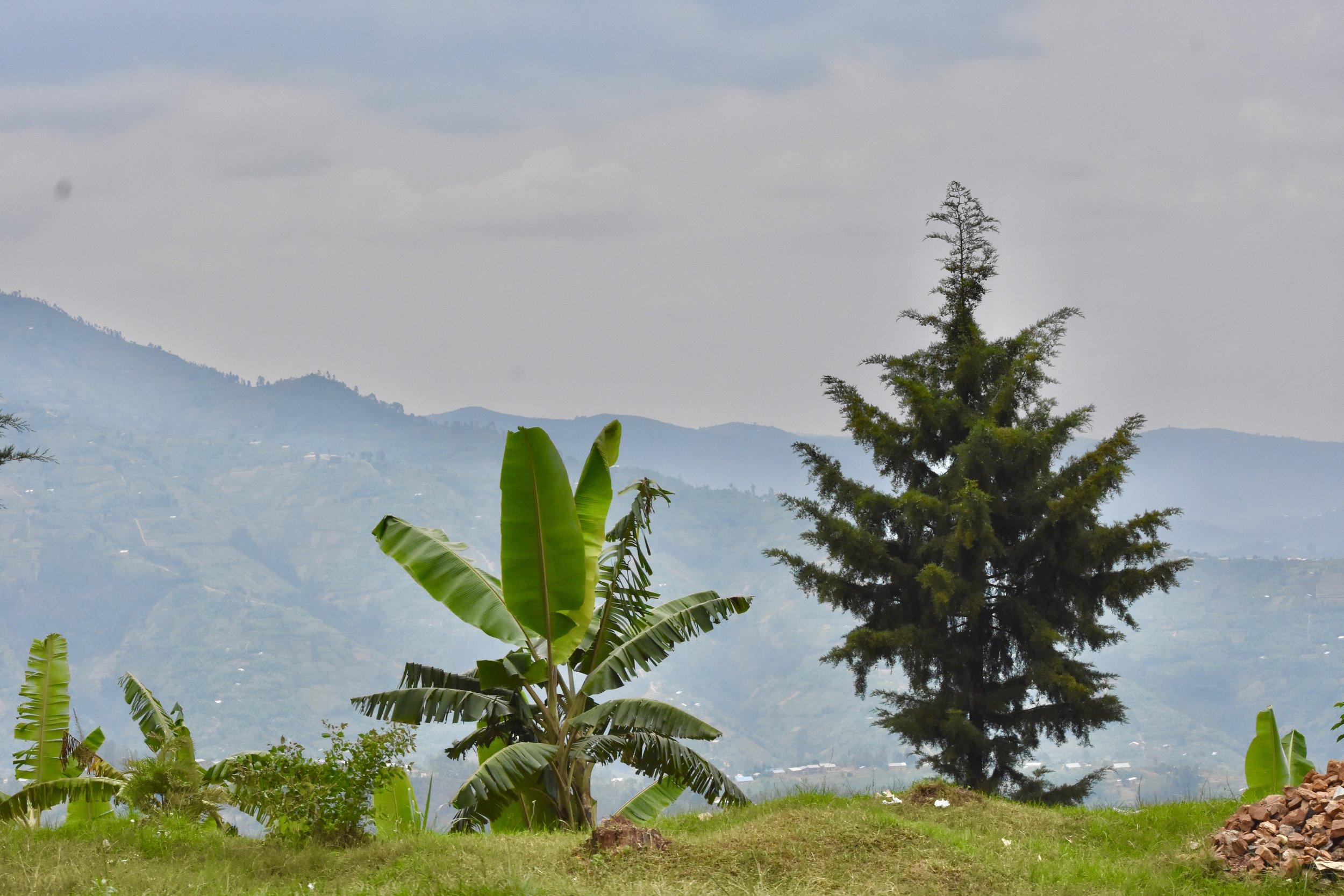 Views of the hills in Rwanda