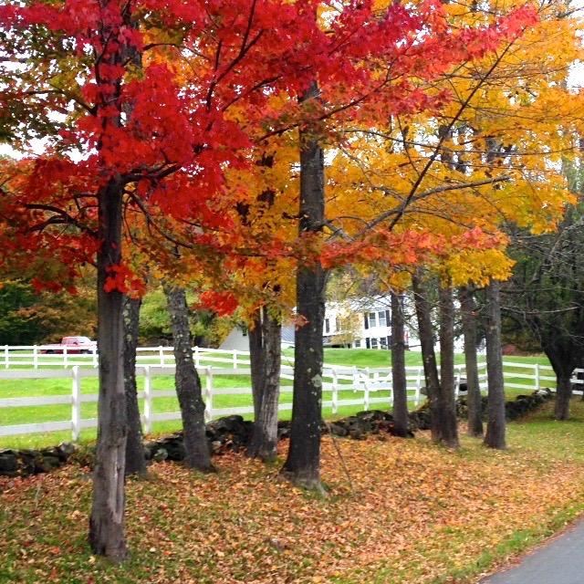 Fall 14 3.jpeg