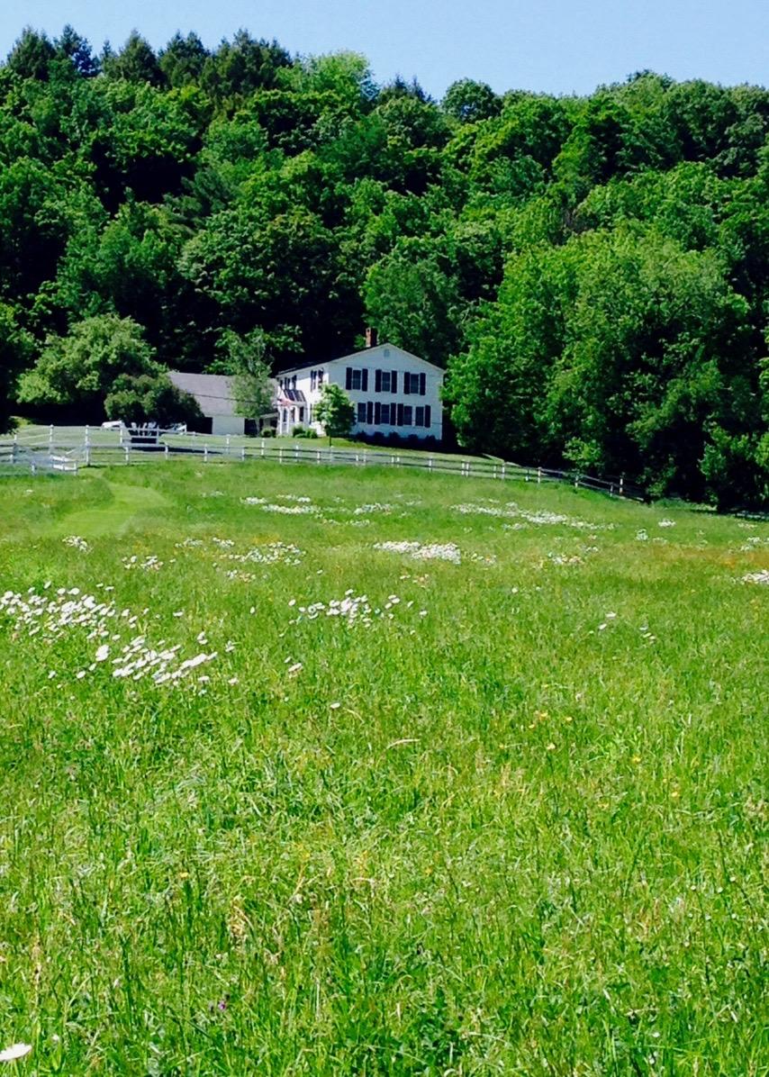 Middle Meadow 05_15.jpeg