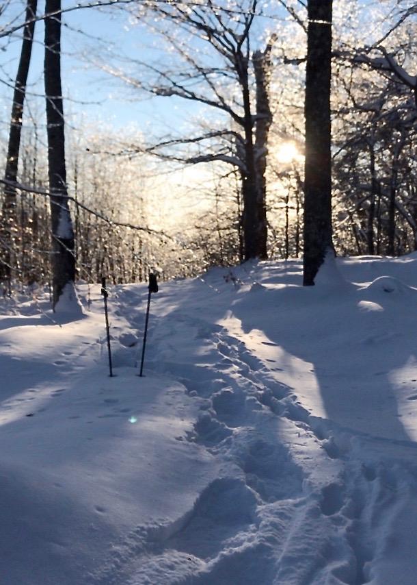 Snow Tracks IV 01_09_18.jpg