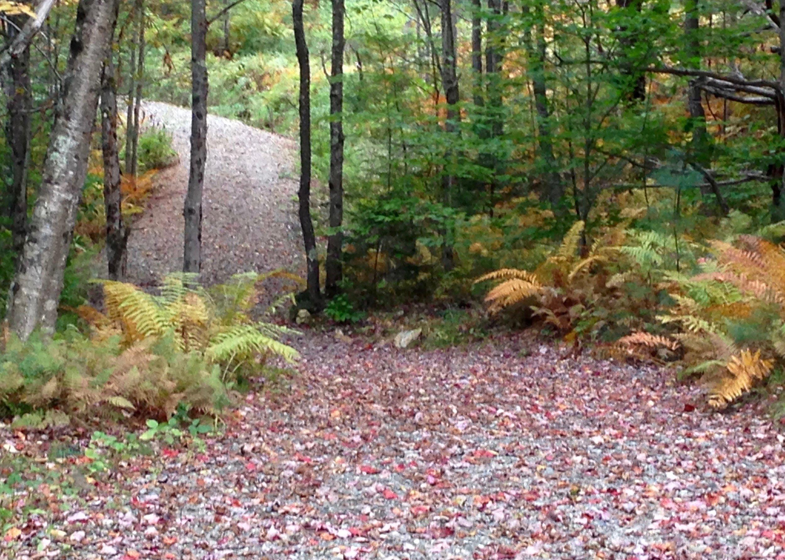 Trail Fall Color 10_3_15.jpeg