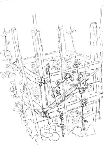 Pea vines climbing compost crib