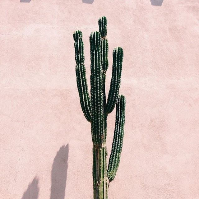 In a mood of cactus and succulent 🌵 . . . . . . . . . . #cactusmood🌵  #pinkcontrast  #desertmood