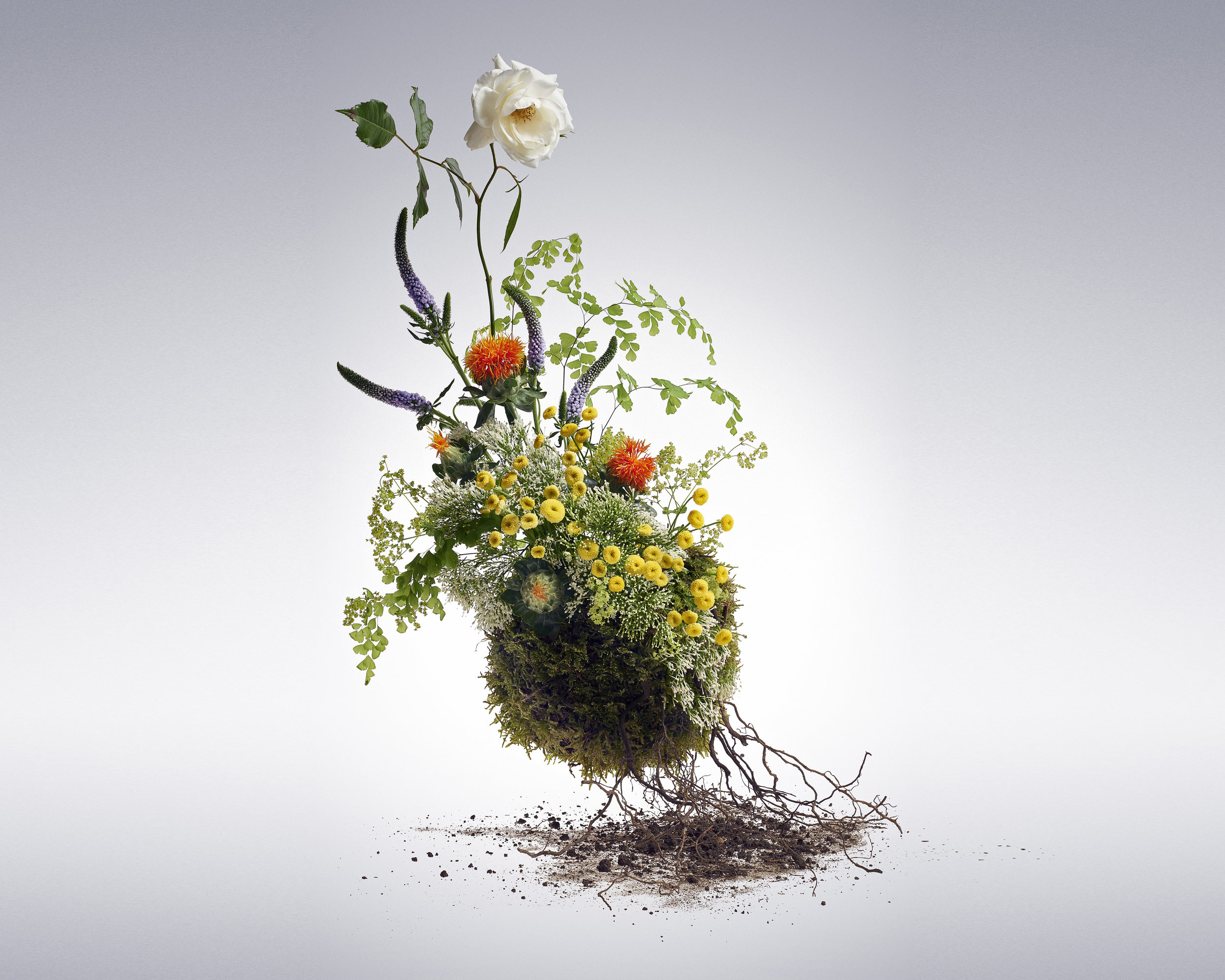 Flowers Still life Study - 2016 - Flower arrangement by  Carlotta Fenini