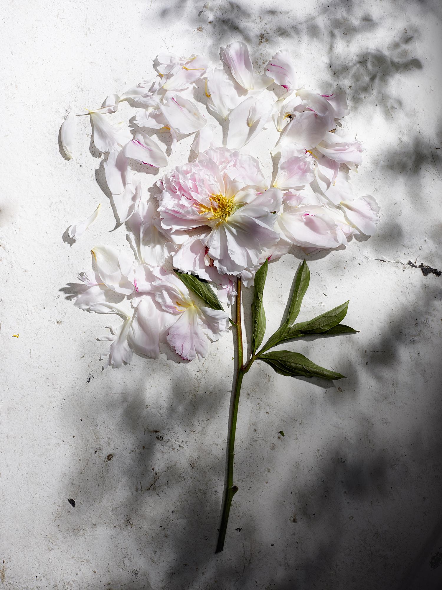 20150615_Flowers_Tear.jpg