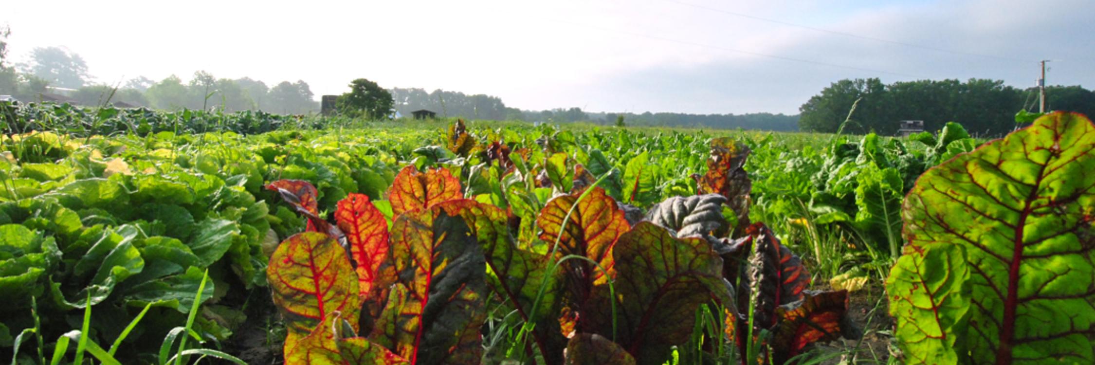 Image: New Earth Farm