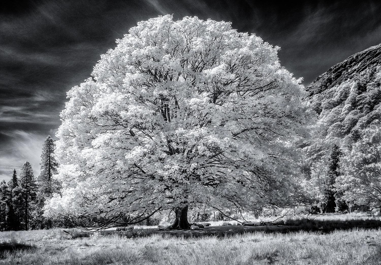 Glowing Tree Paul Fowles Photography, Aberdovey Aberdyfi,.jpg