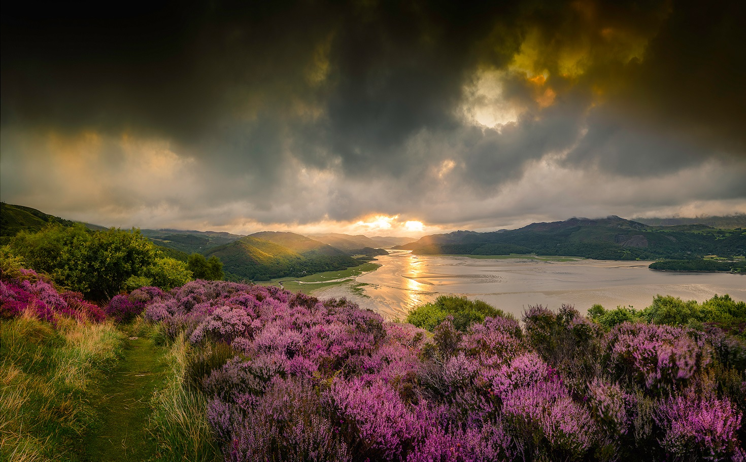 Paul Fowles Photography, Aberdovey Aberdyfi,  Heather In The Morning.jpg