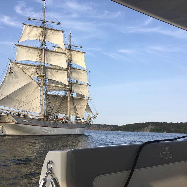 Rare and beautiful surprise!  #solarboatstockholm #solliner #stockholm #visitstockholm🇸🇪 #boattours #greendreamboats  #summer
