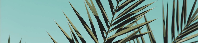 Palm and logo.jpg
