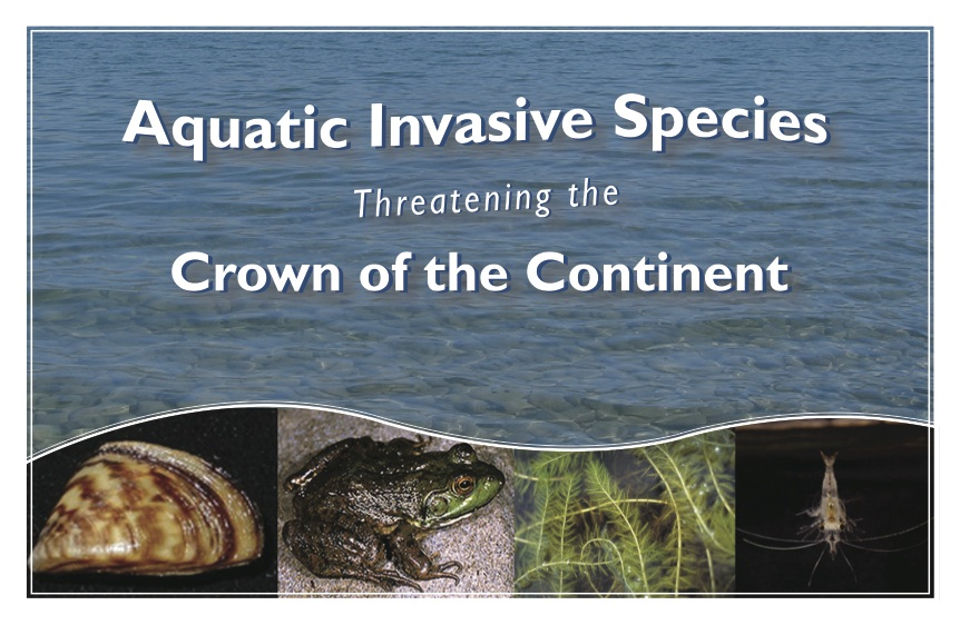 Aquatic Invasive Species Threatening the Crown of the Continent - Use this guide to help you identify aquatic invasive plants that are threatening the Crown of the Continent. The guide will act as a tool to assist in prevention and identification of AIS within the COCE.