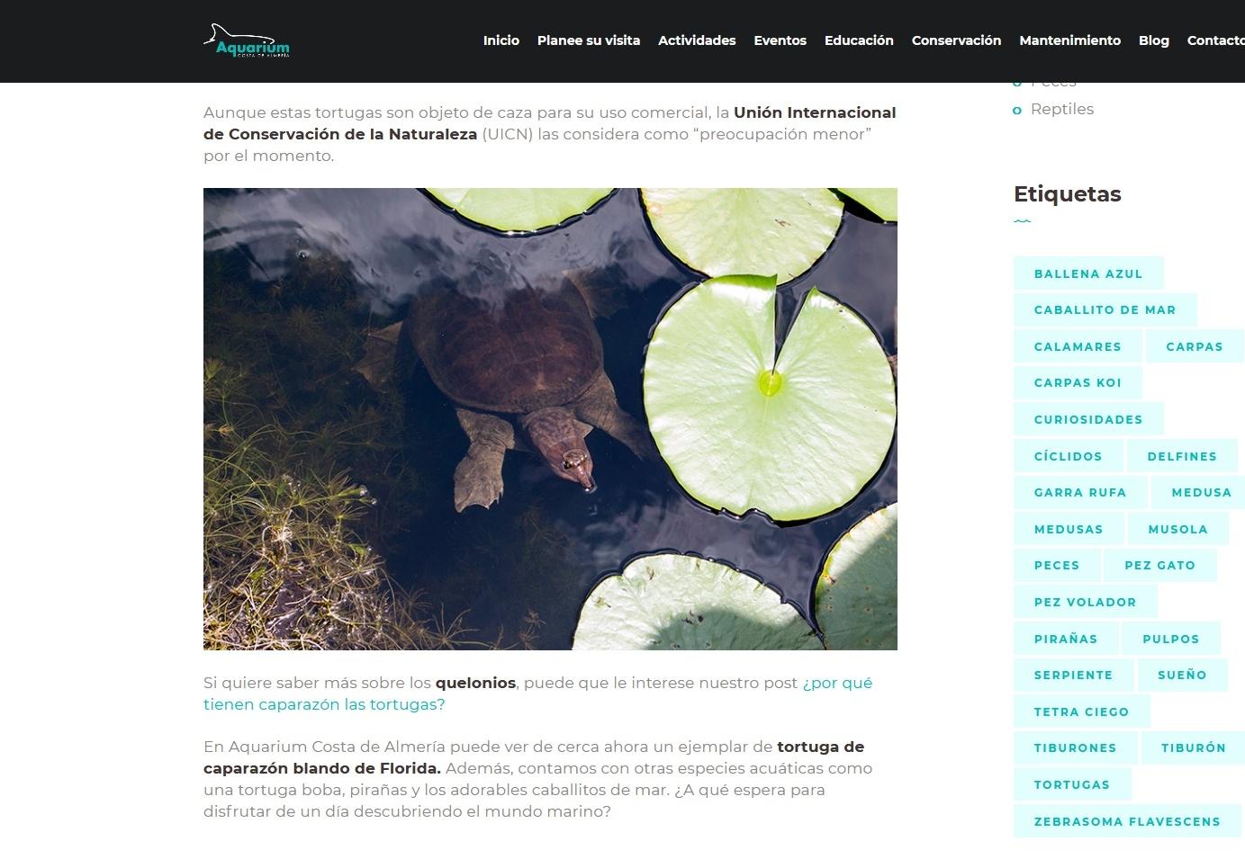 Florida softshell turtle (Aquarium Costa de Almería - Spain)