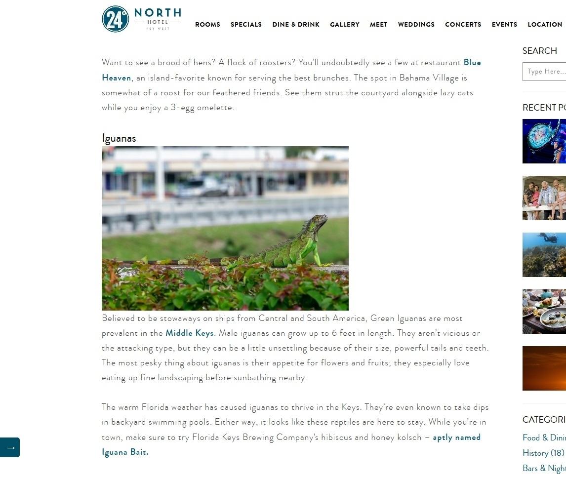 Iguana (24 Degrees North Hotel - Key West, Florida)
